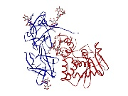 Fig. 3: A-B protein toxin ricin (2AAI.pdb). B-chain blue ribbon with bound carbohydrates, A-chain red ribbon.